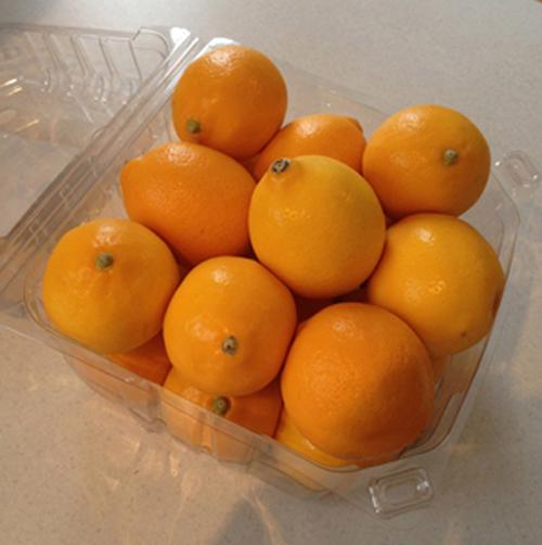 bitter orange wirkung